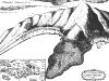 1694 Engraving